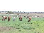 Vacances a GABILEY, Somaliland